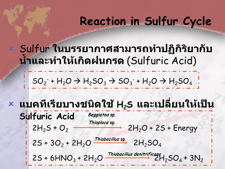 Reaction in Sulfur Cycle