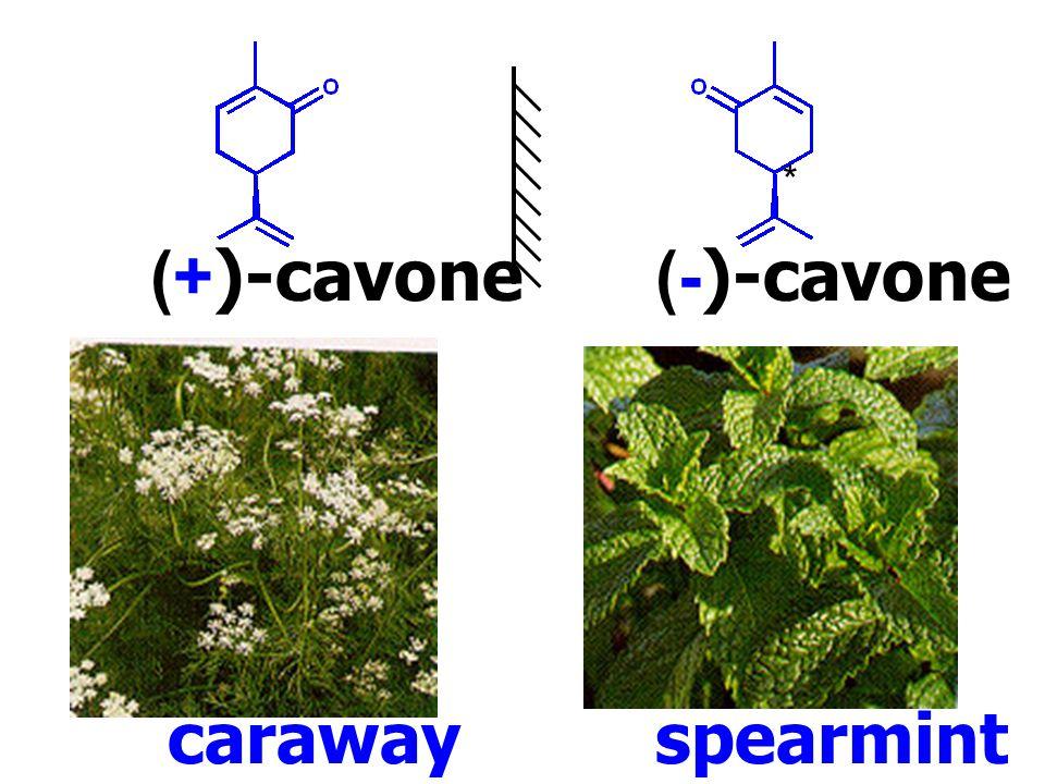 (+)-cavone (-)-cavone * caraway spearmint