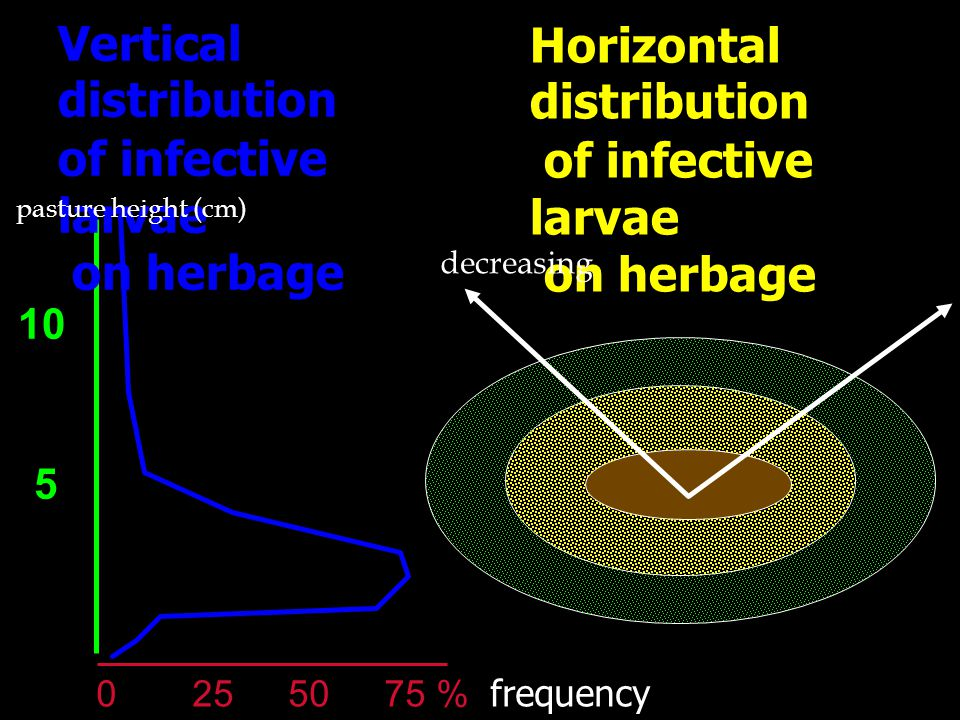 Vertical distribution of infective larvae on herbage