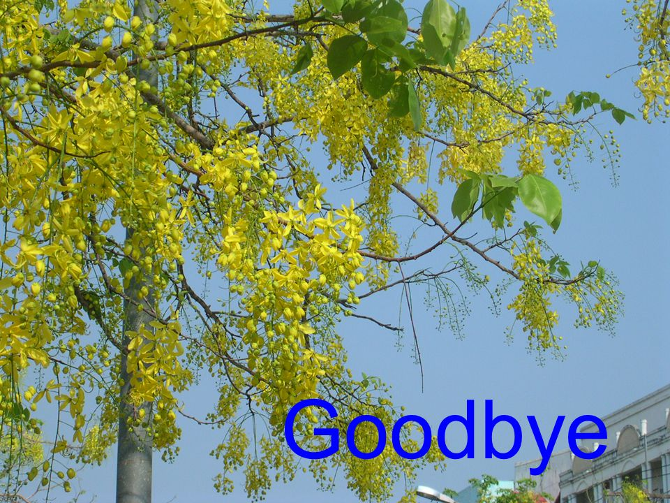 Goodbye. Goodbye