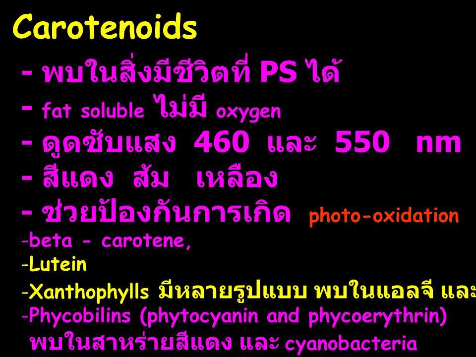 Carotenoids - พบในสิ่งมีชีวิตที่ PS ได้ - fat soluble ไม่มี oxygen