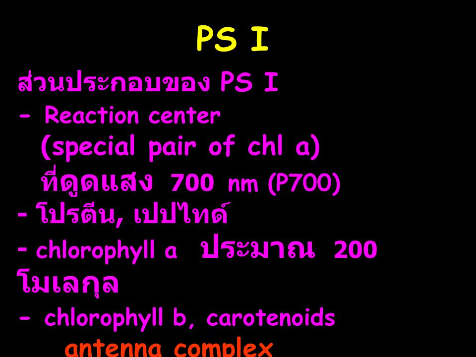 PS I ส่วนประกอบของ PS I - Reaction center (special pair of chl a)