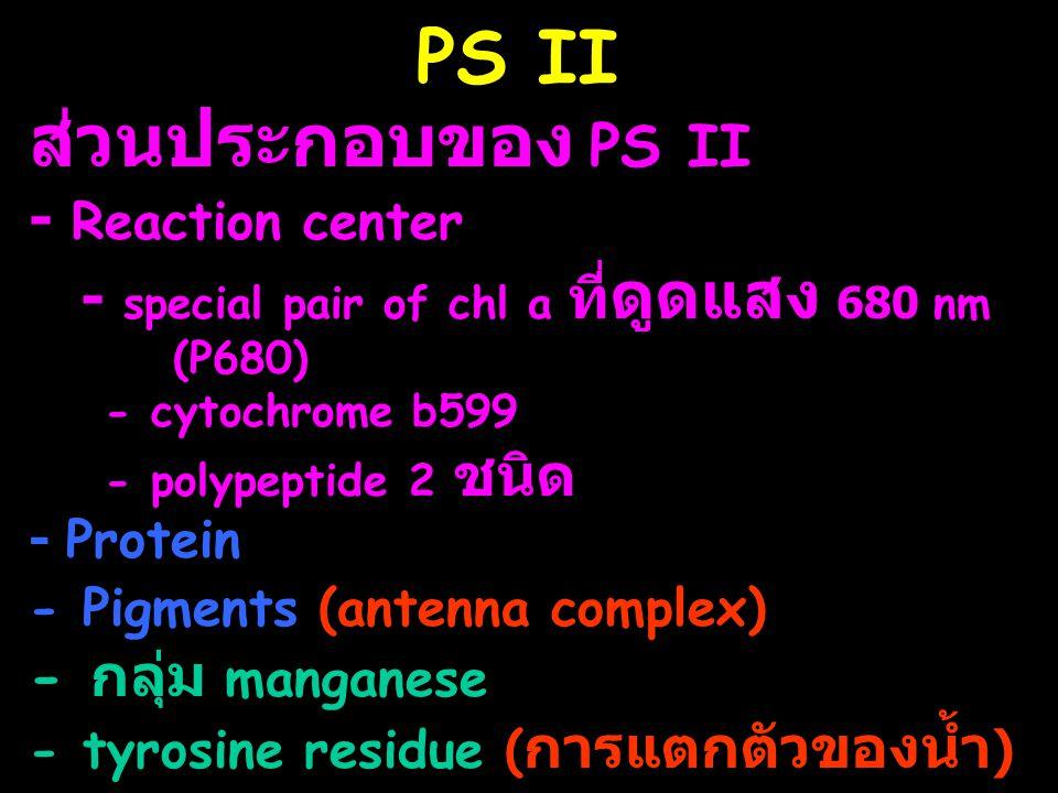 PS II ส่วนประกอบของ PS II - Reaction center