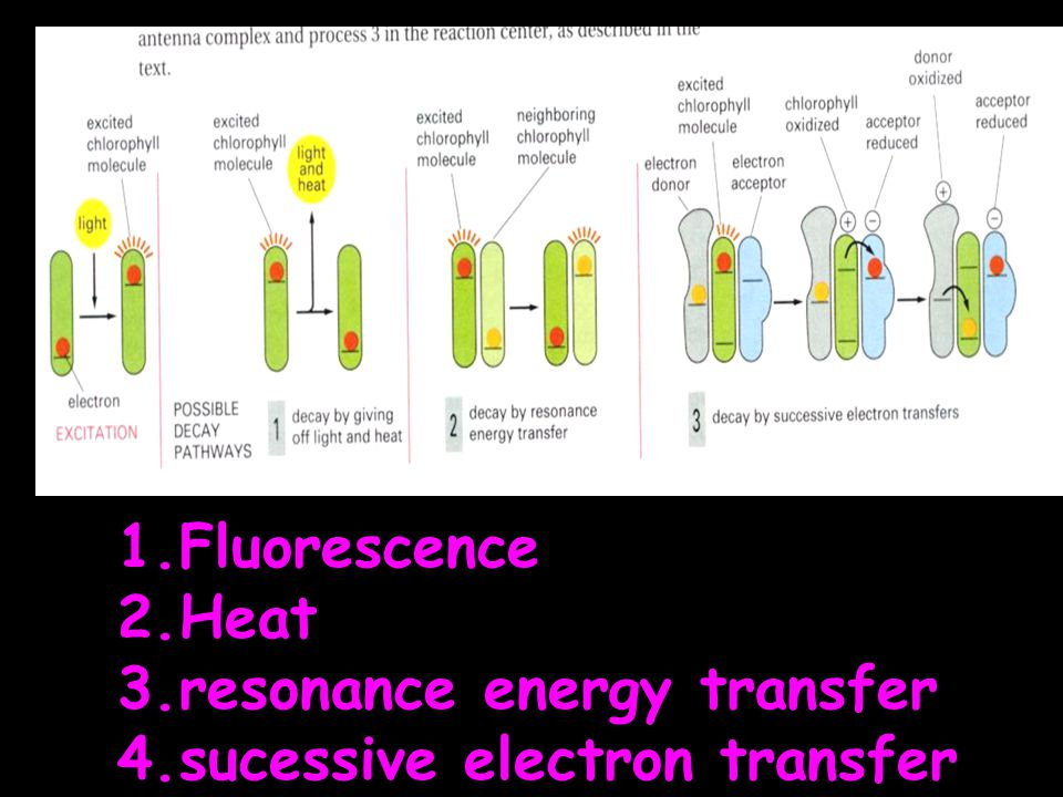 Fluorescence Heat resonance energy transfer sucessive electron transfer