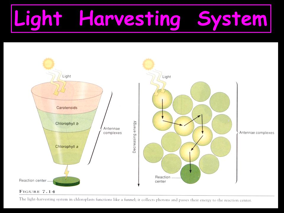 Light Harvesting System