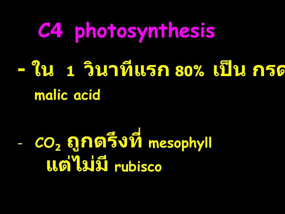 - ใน 1 วินาทีแรก 80% เป็น กรด 4C malic acid