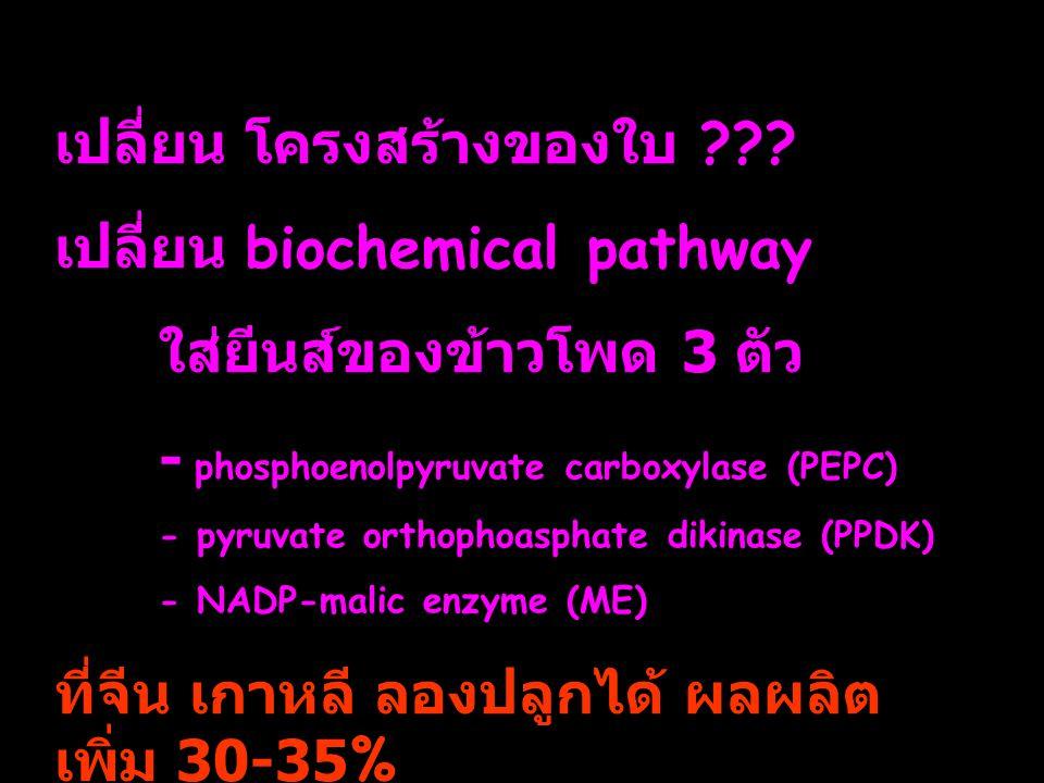 เปลี่ยน โครงสร้างของใบ เปลี่ยน biochemical pathway