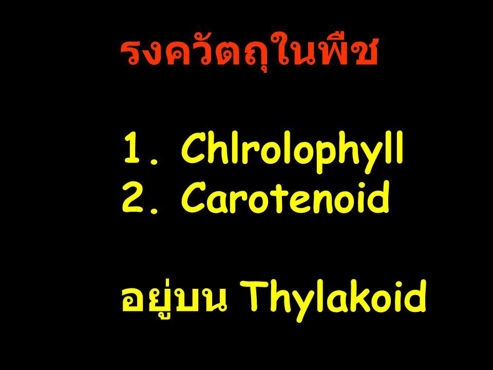 รงควัตถุในพืช 1. Chlrolophyll 2. Carotenoid อยู่บน Thylakoid