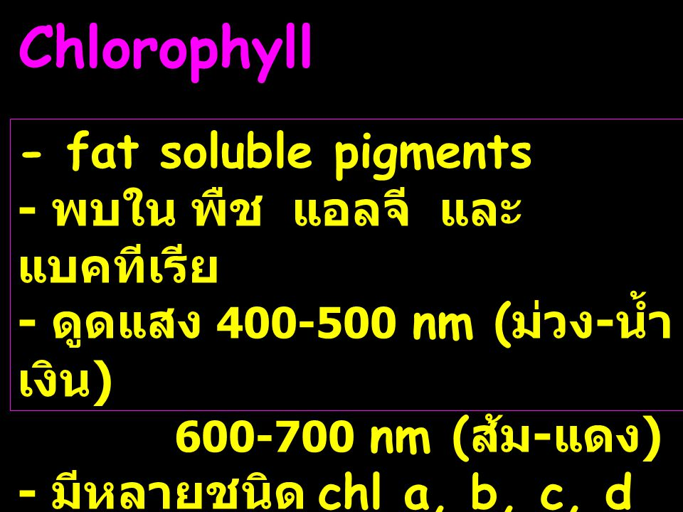 Chlorophyll - fat soluble pigments - พบใน พืช แอลจี และแบคทีเรีย