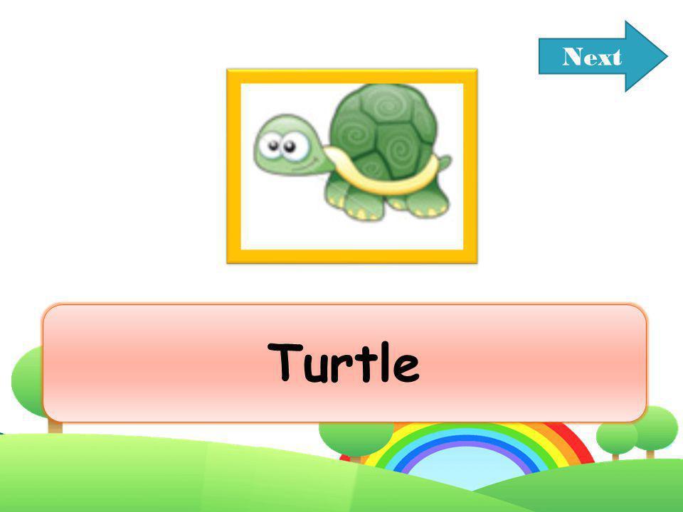Next Turtle