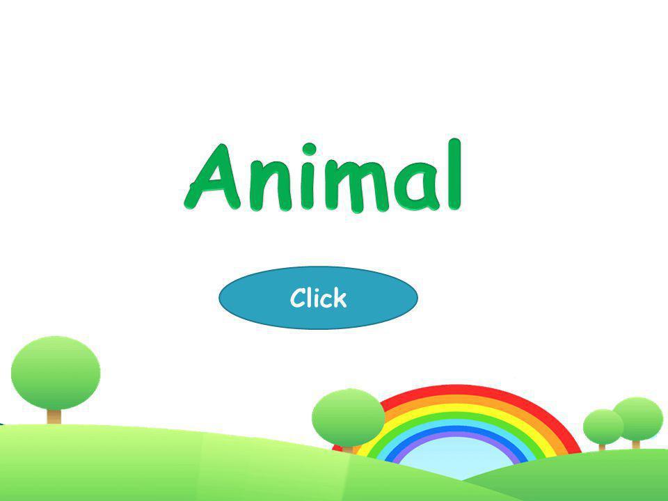 Animal Click