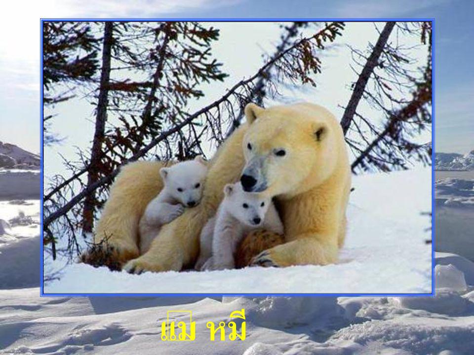 แม่ หมี