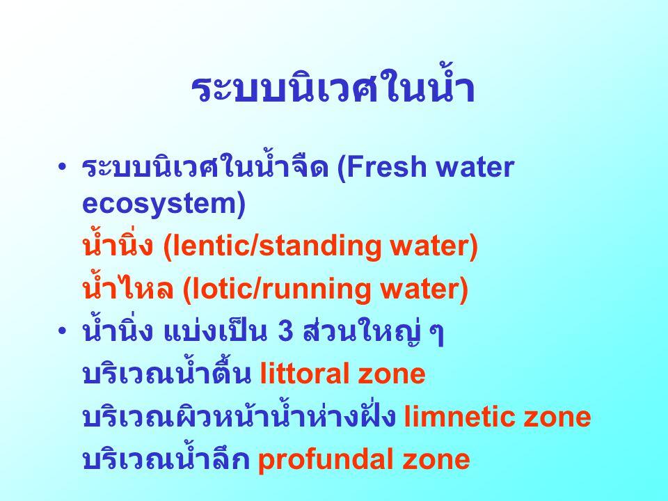 ระบบนิเวศในน้ำ ระบบนิเวศในน้ำจืด (Fresh water ecosystem)