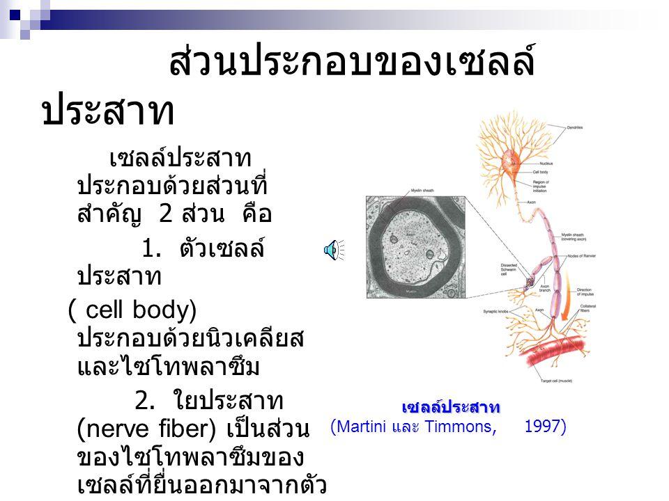 ส่วนประกอบของเซลล์ประสาท
