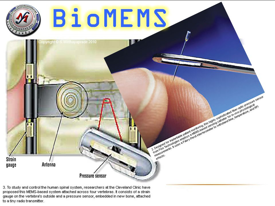 BioMEMS Copyright © S.Witthayapradit 2010