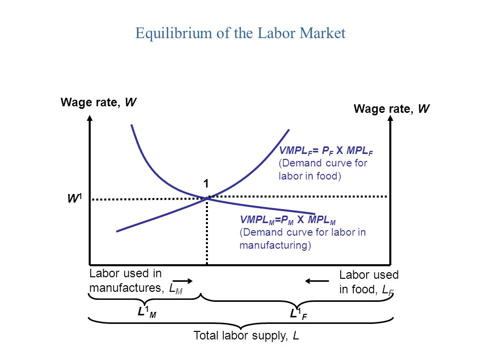 Equilibrium of the Labor Market