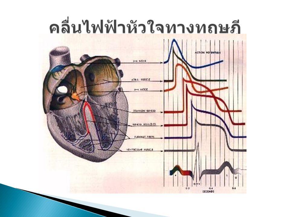 คลื่นไฟฟ้าหัวใจทางทฤษฎี