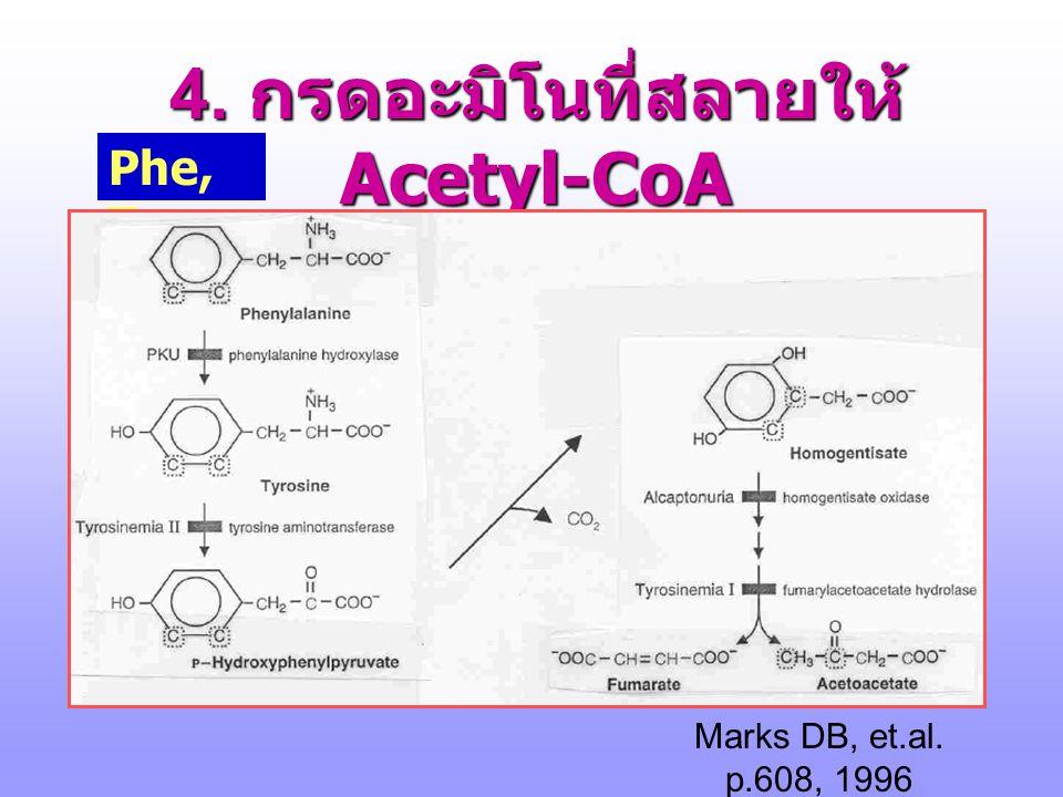 4. กรดอะมิโนที่สลายให้ Acetyl-CoA