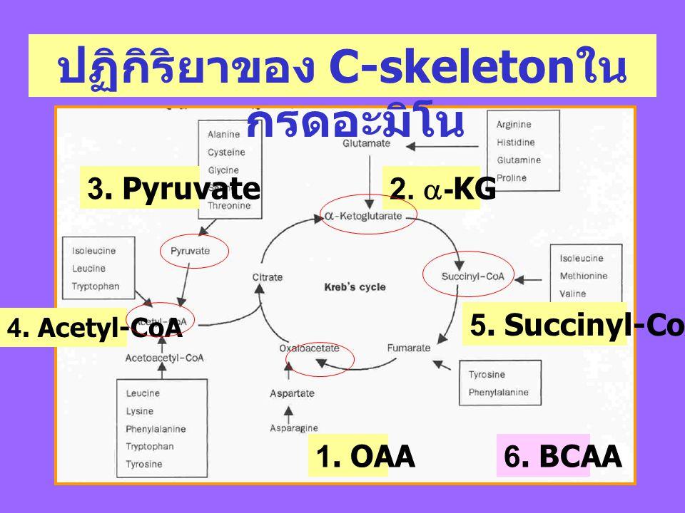 ปฏิกิริยาของ C-skeletonในกรดอะมิโน