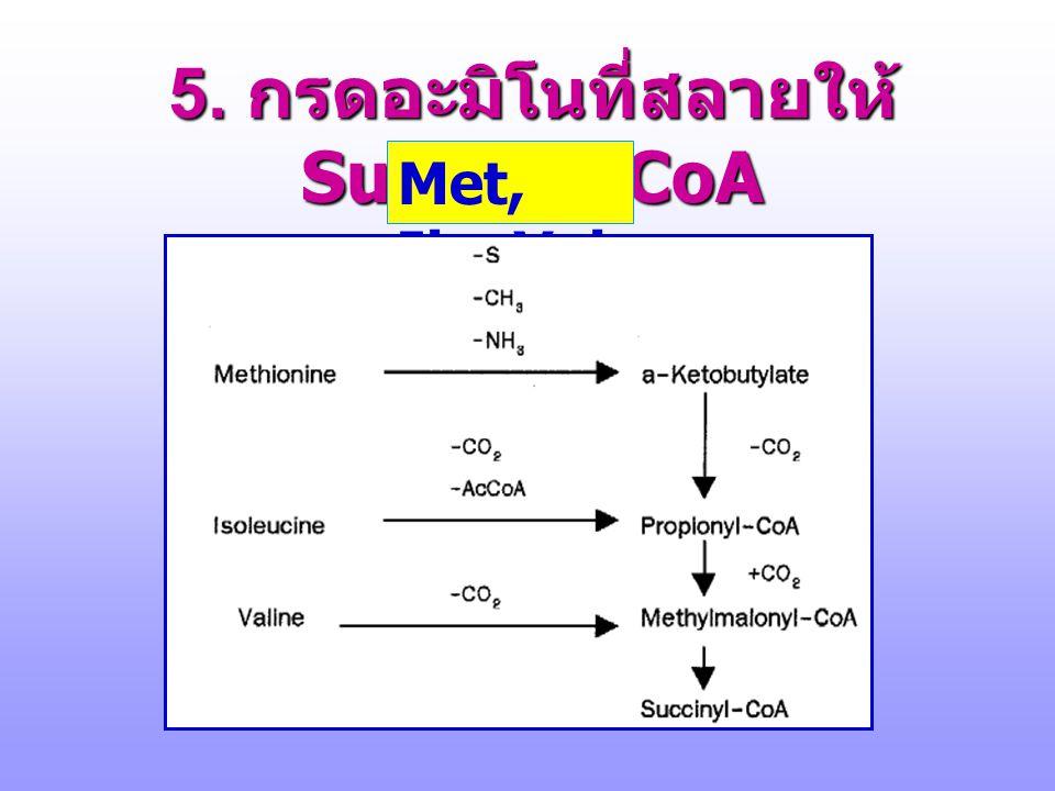 5. กรดอะมิโนที่สลายให้ Succinyl-CoA