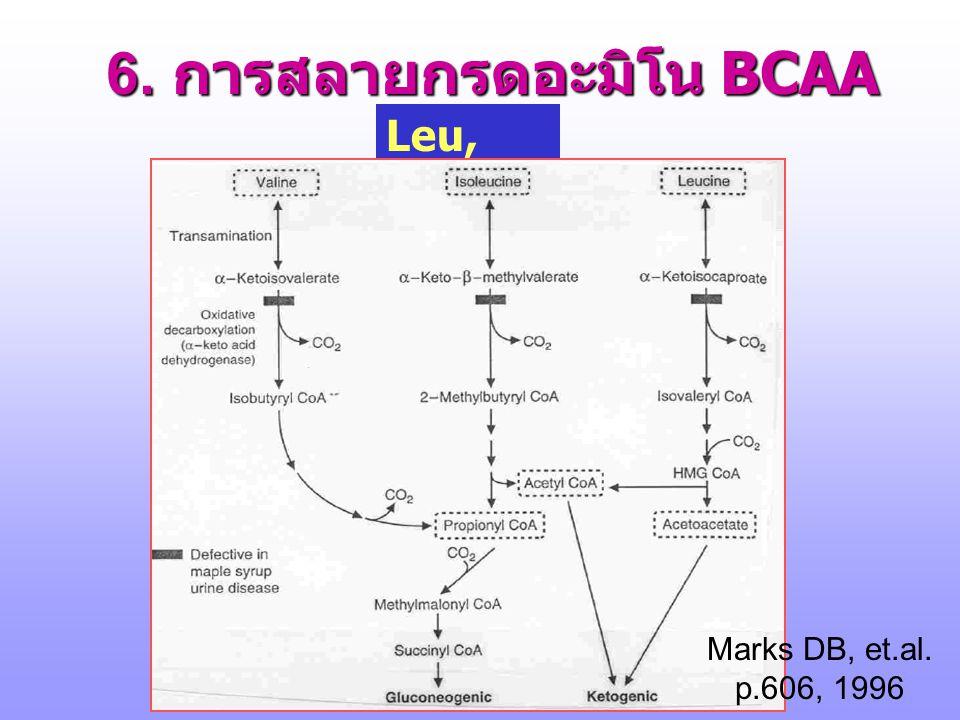 6. การสลายกรดอะมิโน BCAA