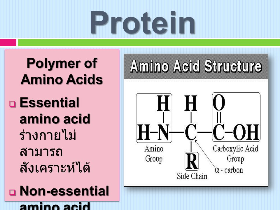 Protein Polymer of Amino Acids
