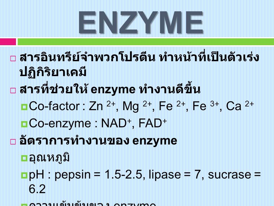 ENZYME สารอินทรีย์จำพวกโปรตีน ทำหน้าที่เป็นตัวเร่ง ปฏิกิริยาเคมี