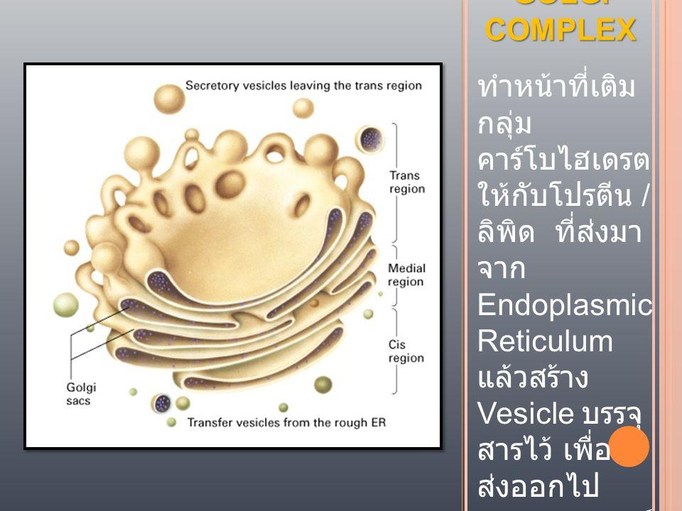 GOLGI COMPLEX