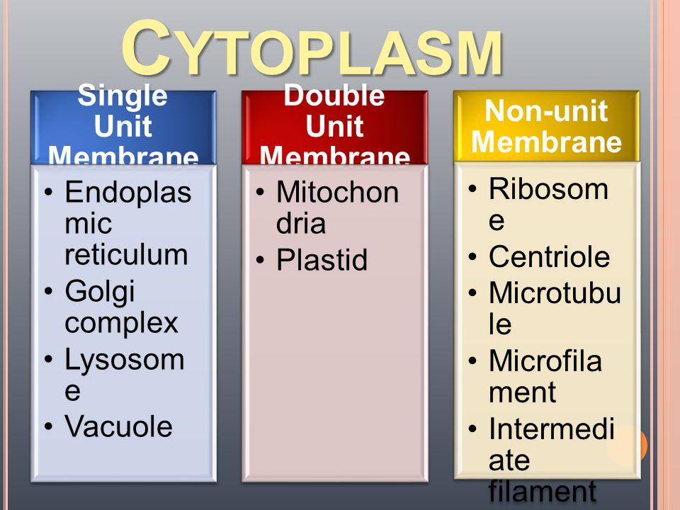 Cytoplasm Single Unit Membrane Endoplasmic reticulum Golgi complex