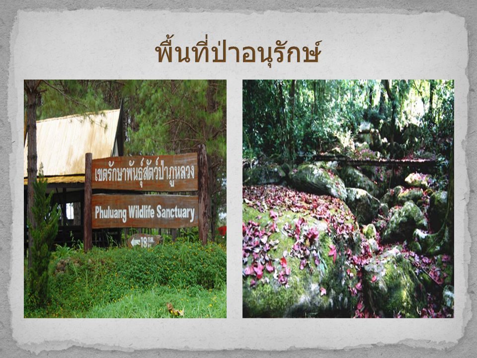 พื้นที่ป่าอนุรักษ์