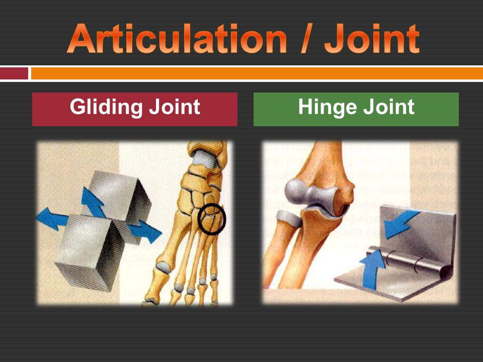 Articulation / Joint Gliding Joint Hinge Joint
