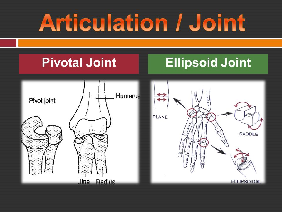 Articulation / Joint Pivotal Joint Ellipsoid Joint