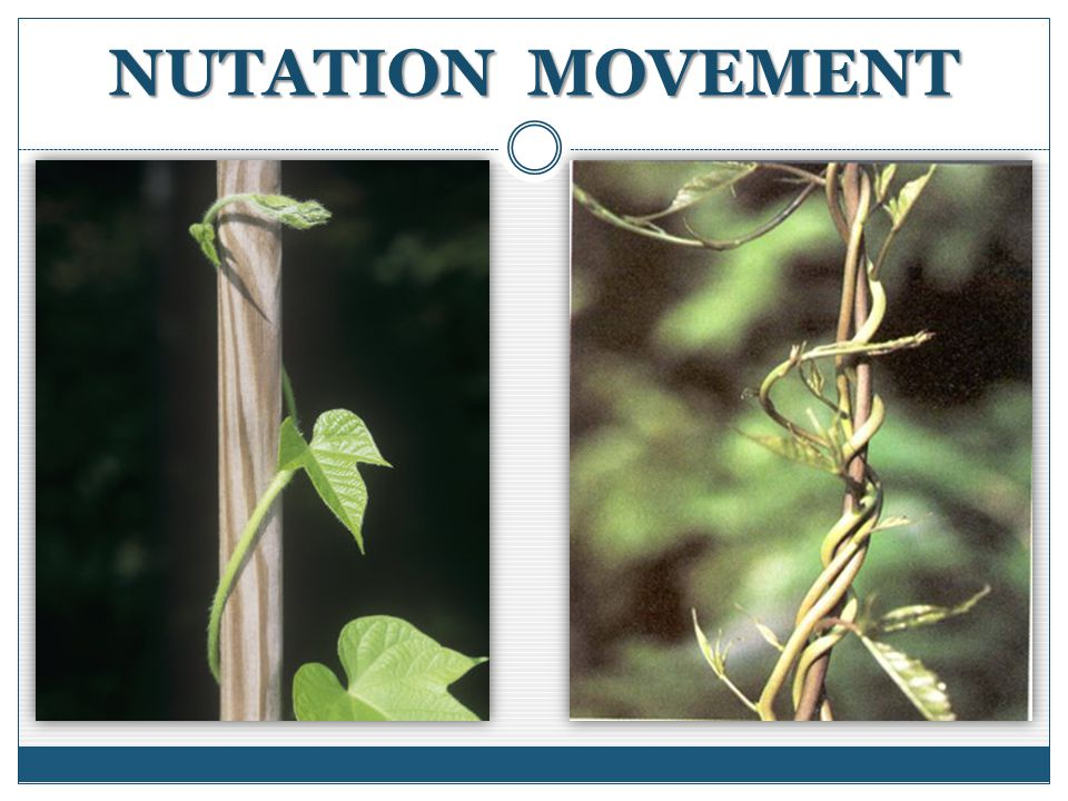 NUTATION MOVEMENT