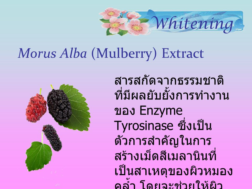 Morus Alba (Mulberry) Extract