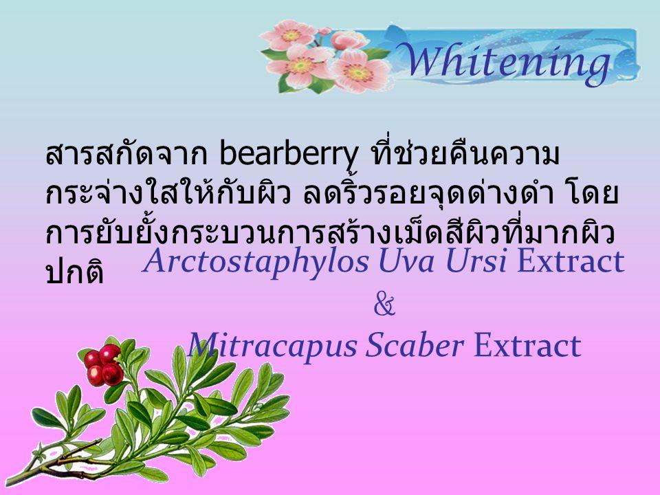 Arctostaphylos Uva Ursi Extract & Mitracapus Scaber Extract