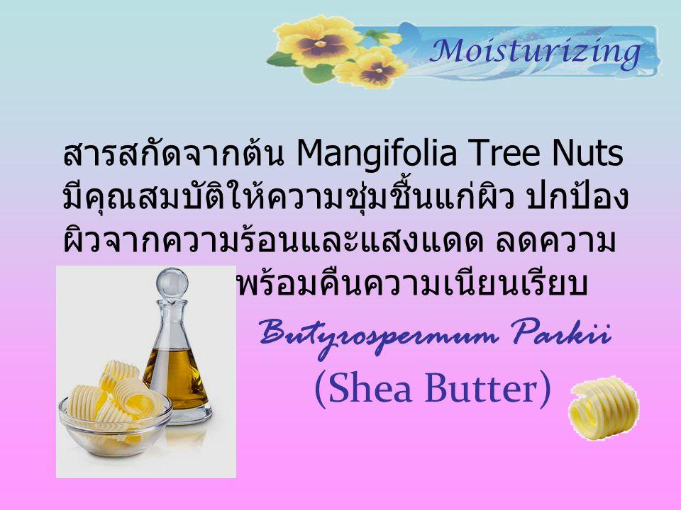 Butyrospermum Parkii (Shea Butter)