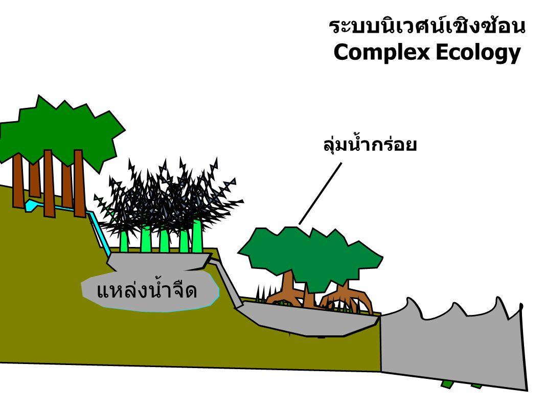 ระบบนิเวศน์เชิงซ้อน Complex Ecology
