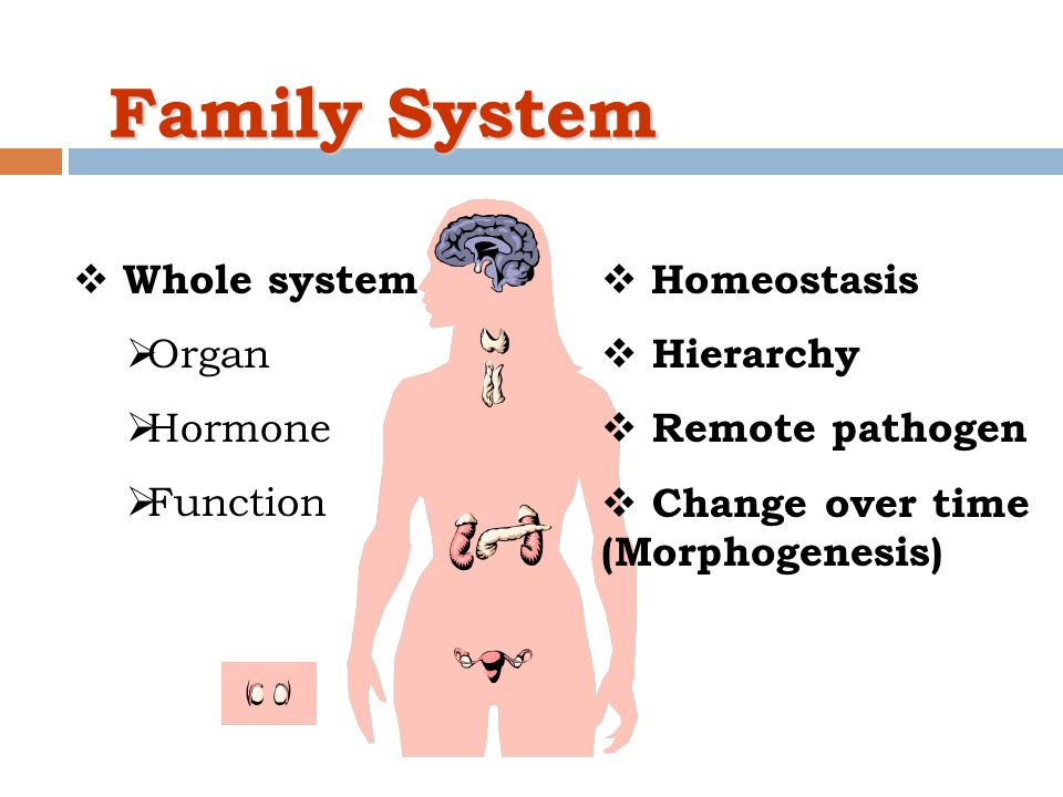 Family System Whole system Organ Hormone Function Homeostasis