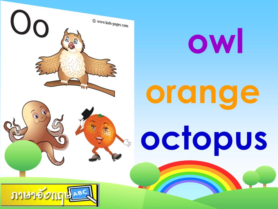 owl orange octopus