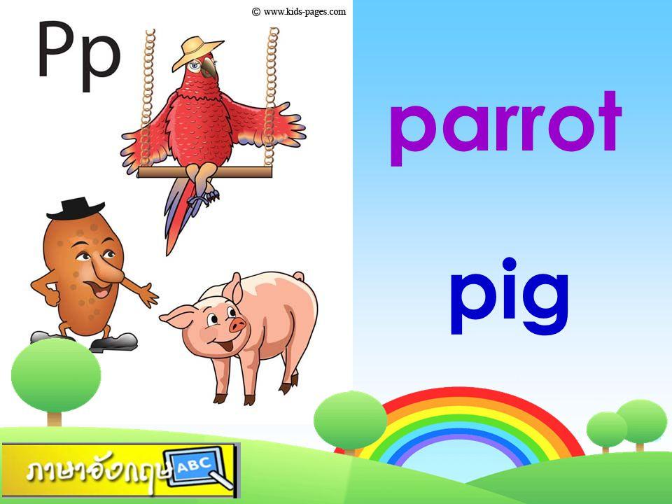 parrot pig