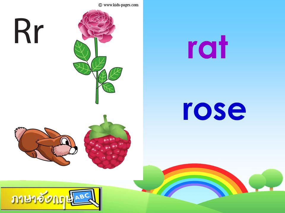 rat rose