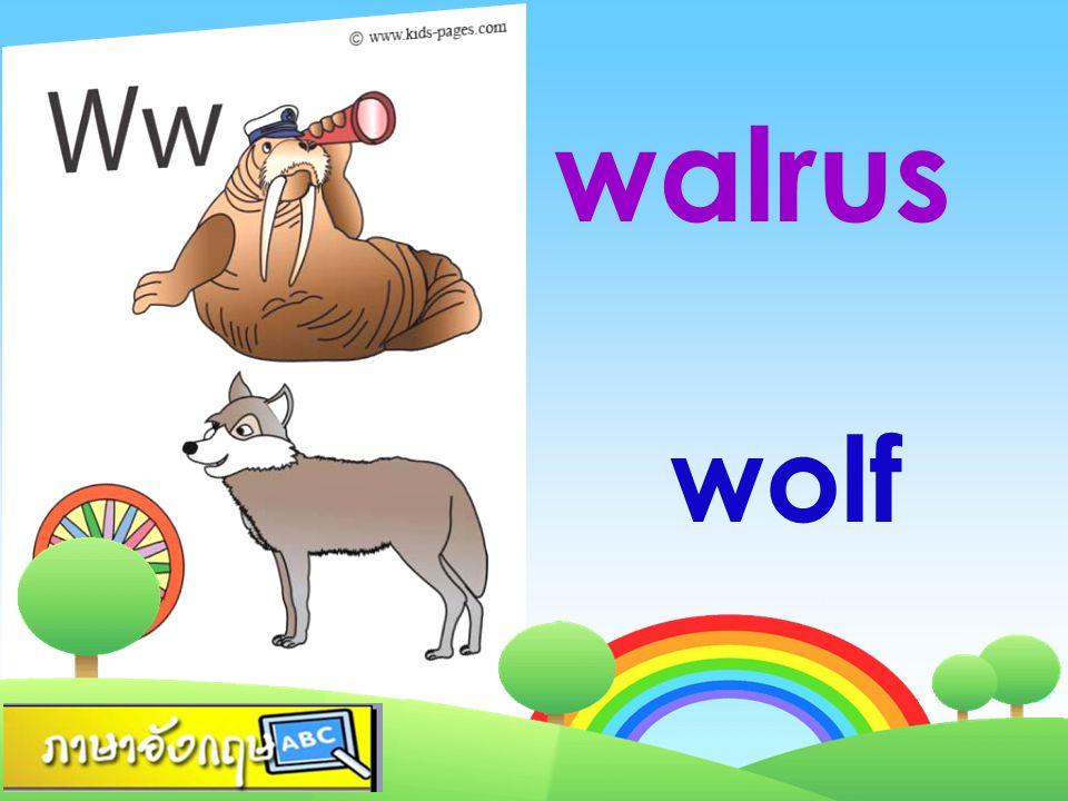 walrus wolf