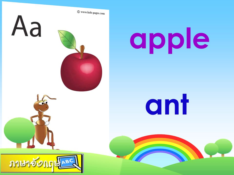 apple ant