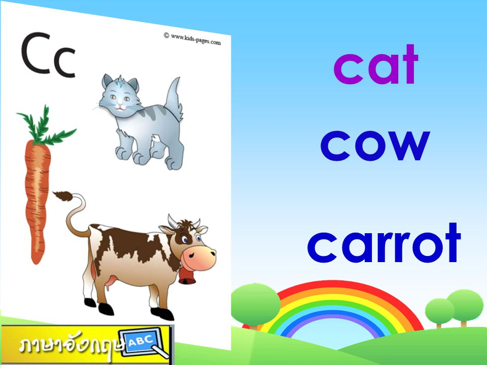 cat cow carrot