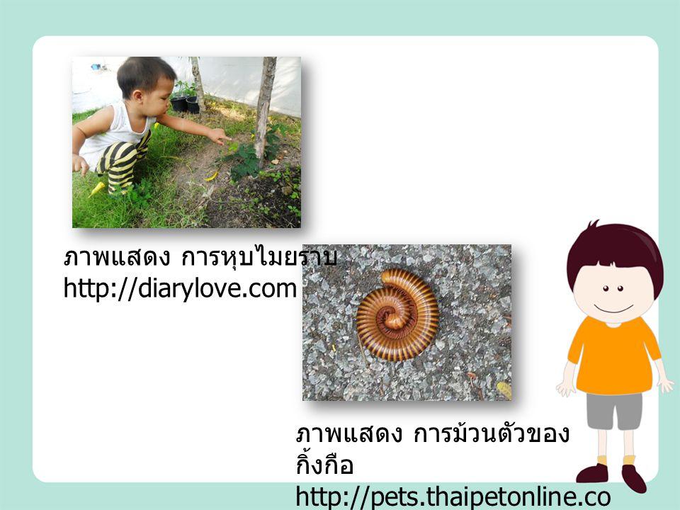 ภาพแสดง การหุบไมยราบhttp://diarylove.com