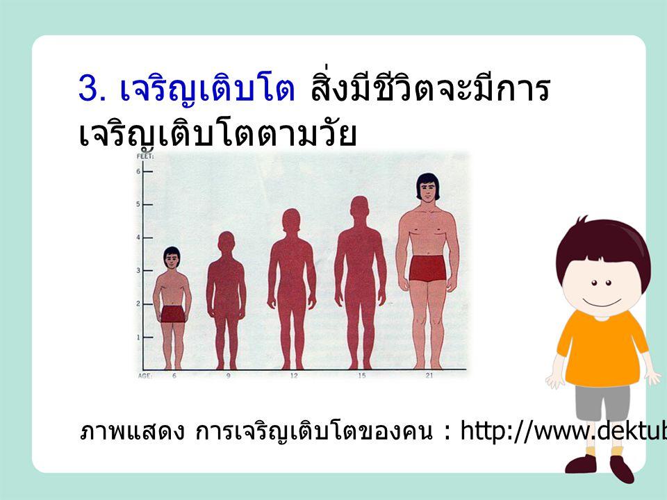 3. เจริญเติบโต สิ่งมีชีวิตจะมีการเจริญเติบโตตามวัย