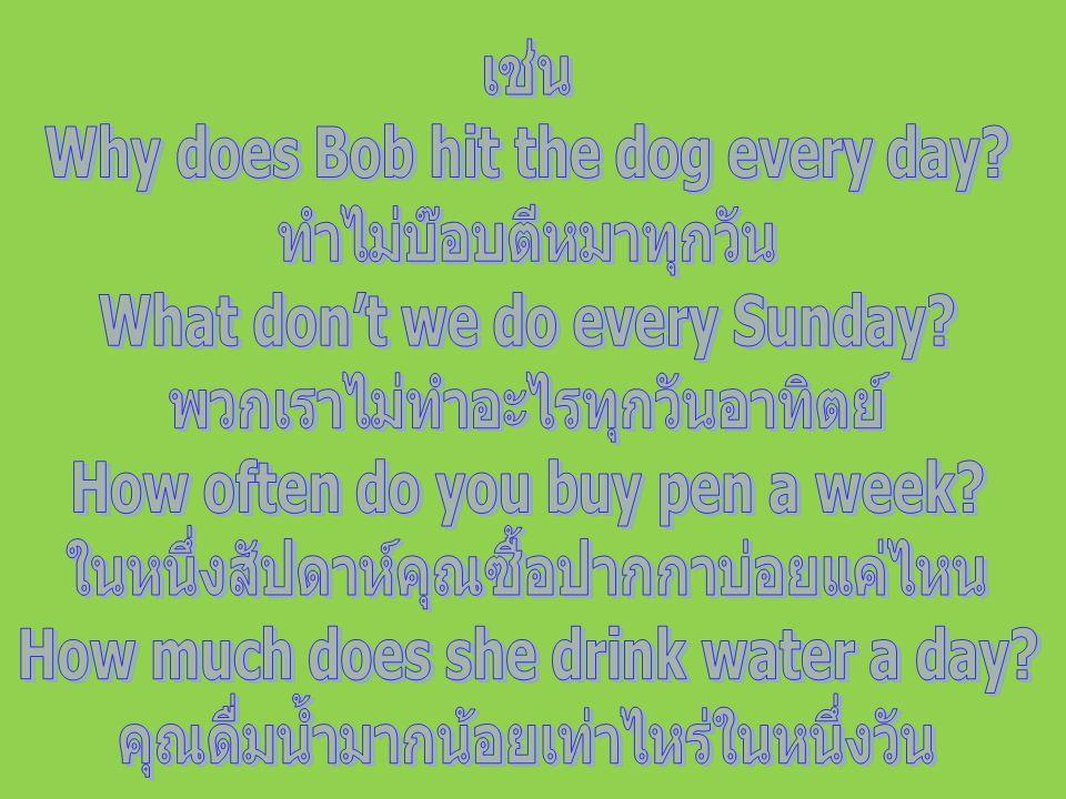 Why does Bob hit the dog every day ทำไม่บ๊อบตีหมาทุกวัน