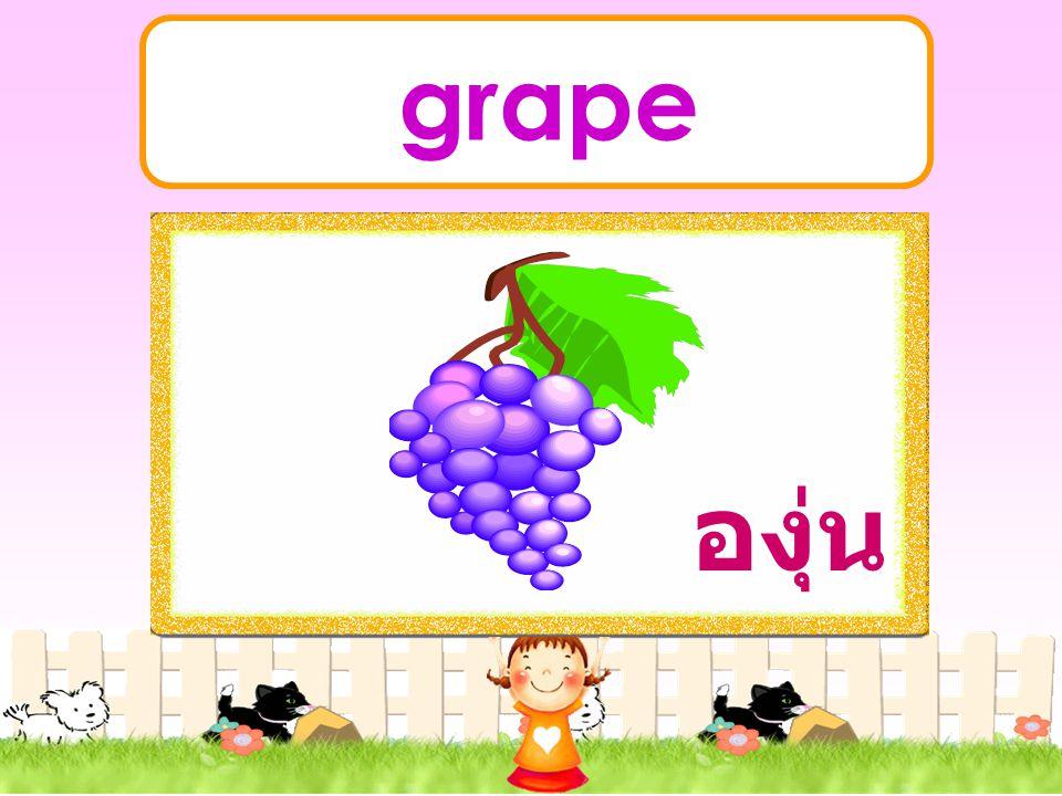 grape องุ่น