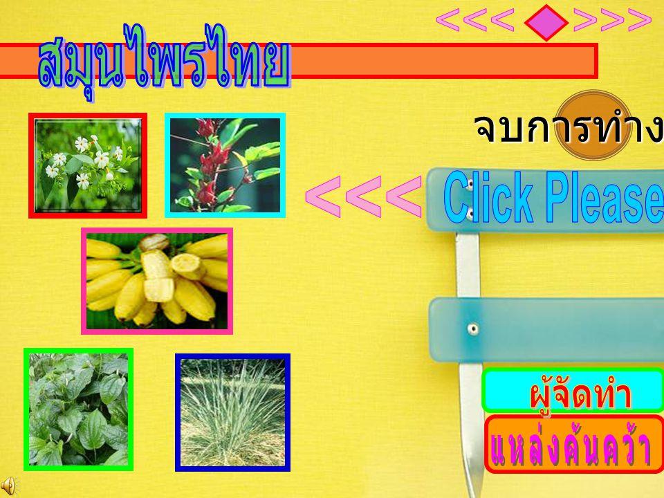 จบการทำงาน <<< <<< สมุนไพรไทย Click Please