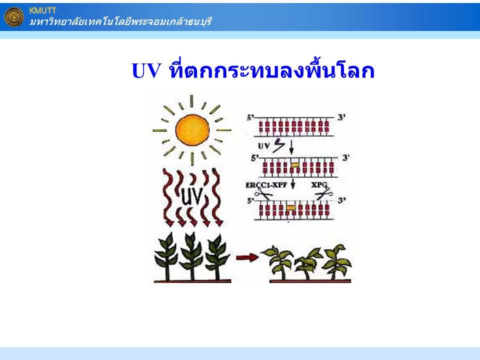 UV ที่ตกกระทบลงพื้นโลก